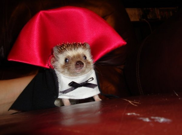 Vampire-Hedgehog