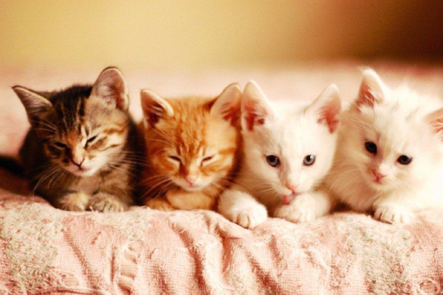 68888__cute-kittens_p
