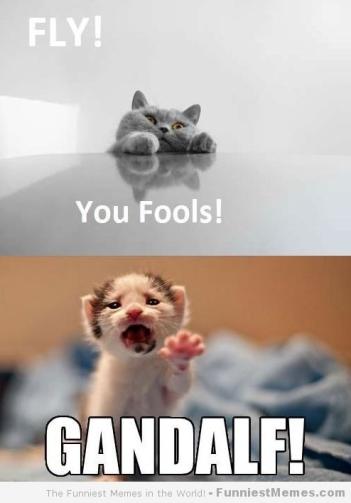 Cat-memes-Fly-you-fools